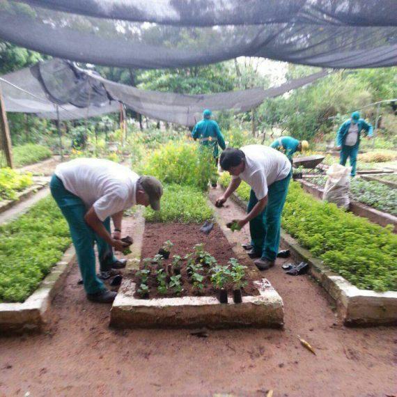 Vivero Municipal alberga más de 40 mil plantines ornamentales que se utilizarán en espacios públicos de Asunción